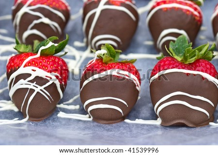 A tray of freshly dipped chocolate covered strawberries. - stock photo