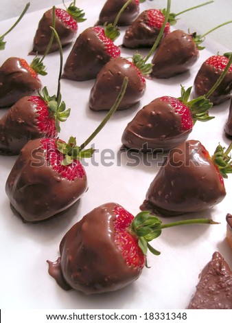 A tray of freshly dipped chocolate covered strawberries.  Delicious! - stock photo