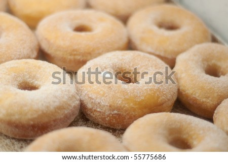 a tray of sugar dusted donuts - stock photo