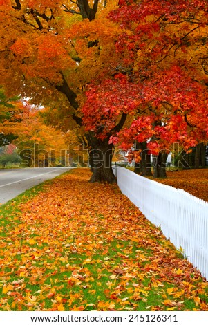 A tree along a country roadside in Michigan hits peak colors. Mears, Michigan, USA - stock photo