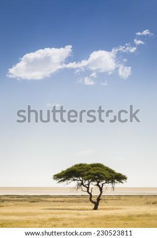 A tree and a cloud, Etosha National Park, northwestern Namibia, Africa - stock photo