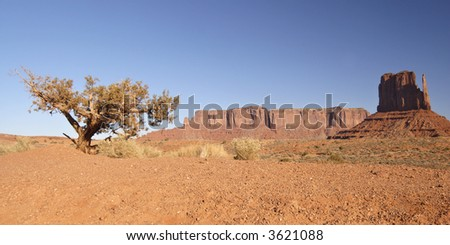 A tree and a Mitten Mesa lit by early morning sun on a cool November day in Monument Valley, Navajo Nation, Utah. - stock photo