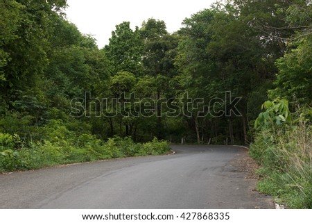 A tree beside the road. - stock photo
