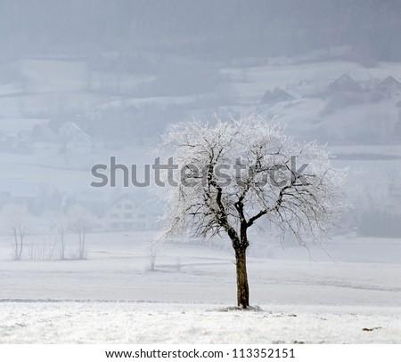 A tree covered with hoar-frost near Villard de Lanc - France - stock photo