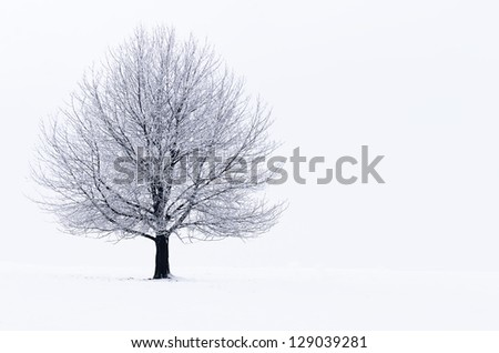 a tree covered with snow - stock photo