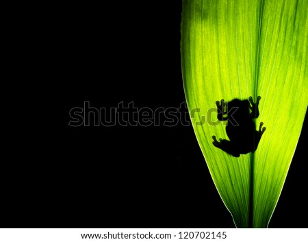 A tree frog silhouette on a plant leaf - stock photo