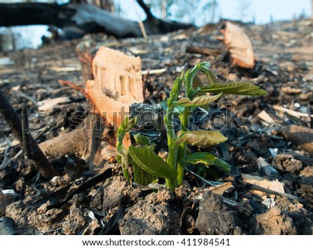 a tree grow in the burned field - stock photo