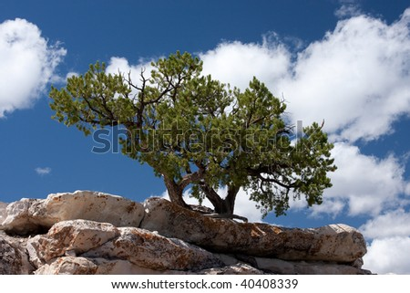 A tree growing on a stone ledge.