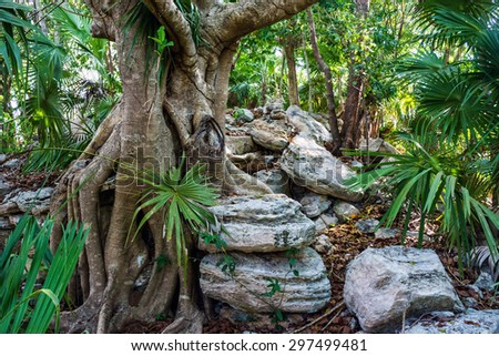 A tree grows among ancient Mayan ruins in Xcalacoco near Playa del Carmen in Mexico. - stock photo