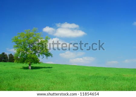 A tree in a field of grass with blue sky.