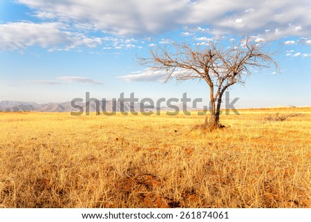 A tree in African Mountains - stock photo