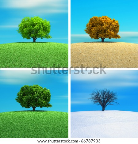 A tree in four season - 3d render - stock photo
