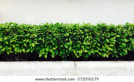 A tree in front of a concrete wall. - stock photo