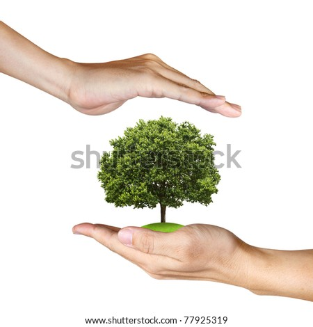 a Tree in human hands on white background - stock photo