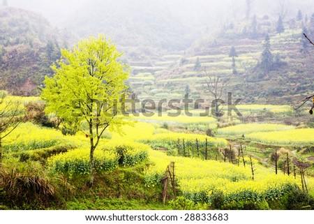 a tree  in the farmland - stock photo