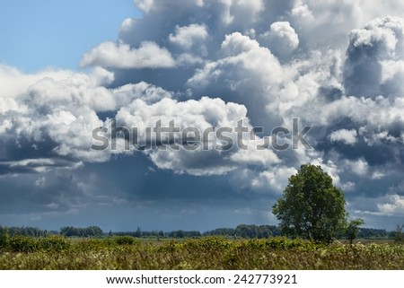 a tree in the field - stock photo