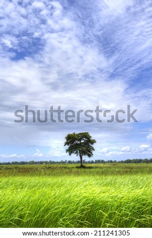 A tree in the green field with blue sky in vertical frame - stock photo