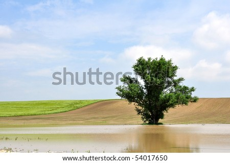 A tree in the inland water - stock photo