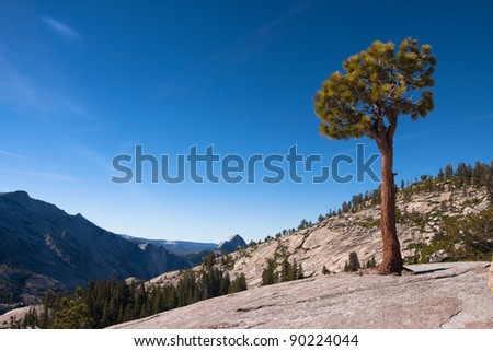 A tree in Yosemite National Park - stock photo
