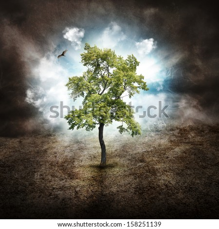 A tree is alone in the woods with on a dry landscape against clouds in the sky for a hope, dream or nature concept. - stock photo