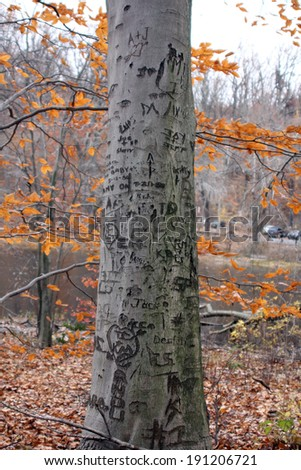 A tree is carved with various initials and expressions.  Autumn leaves are in the background - stock photo