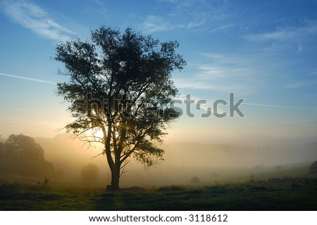 A tree is in fog - stock photo