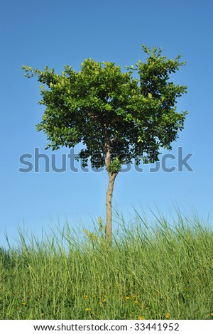 A tree isolated in blue sky background - stock photo
