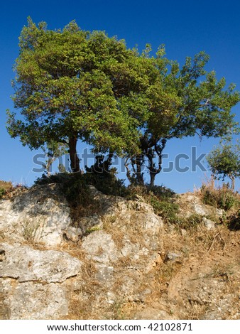 A tree on a bare rock