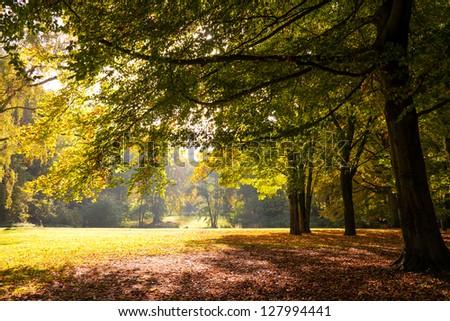 a tree on a sunny autumn day - stock photo
