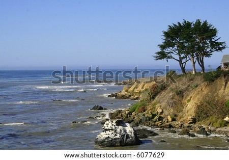 A tree on on a cliff in Cayucos, California. - stock photo