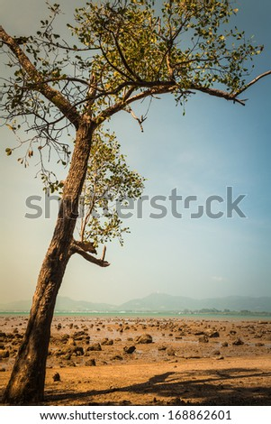 a tree on the beach when low tide in the afternoon