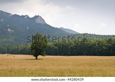 a tree on the peak - stock photo