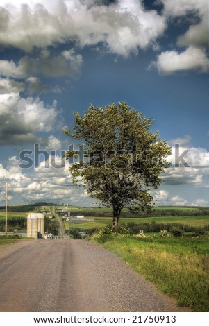 A tree on the side of a rural road in canada - stock photo