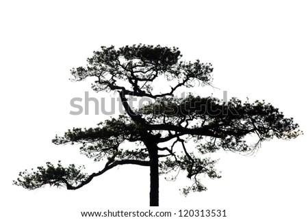 A tree on white background - stock photo
