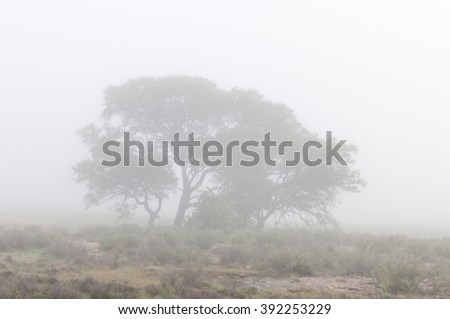 A tree seen through the mist covering the mountains of the Mountain Zebra National Park near Cradock in South Africa - stock photo