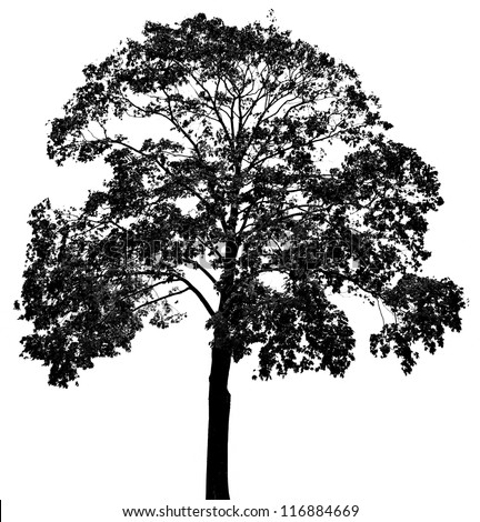 a tree silhouette - stock photo