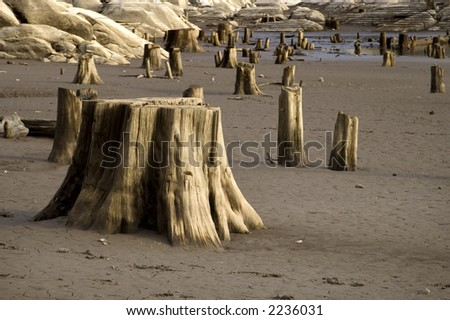 A tree stump exposed with low water levels. - stock photo