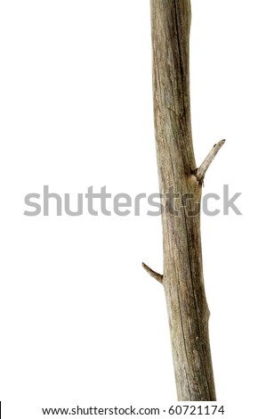 a tree trunk isolated on a white background - stock photo