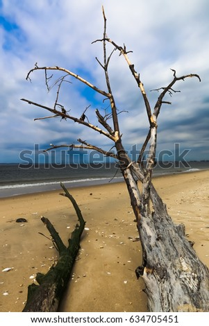 A tree trunk, washed up on shore