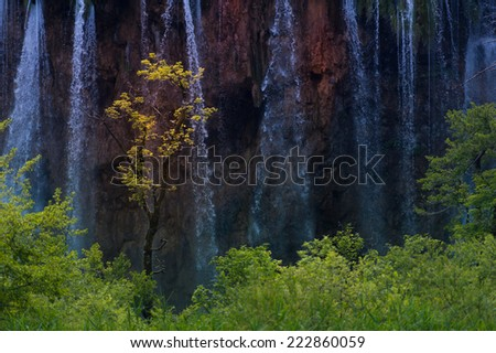 A tree with yellow leaves standing in the middle of the plitvice forest with the water falling beside it