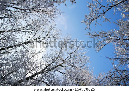 a trees in the snow in beautiful winter forest