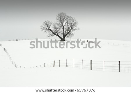 A trees sits on top of a hill in the middle of a pasture, which is filled with snow on a cold winter day. - stock photo