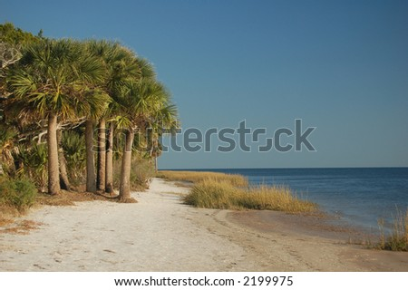 A tropical beach with white sand and palm trees. - stock photo