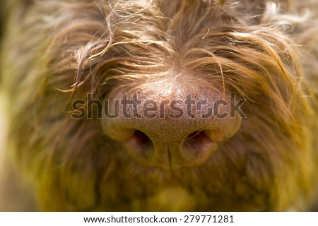 A truffle dog's nose. - stock photo
