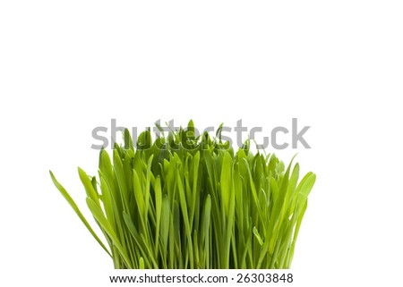 A tuft of green grass isolated on white.