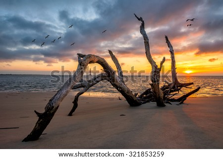 A twisted old tree lies along the Atlantic Coast at Folly Beach in South Carolina. Morris Island lighthouse can be seen in the background. - stock photo