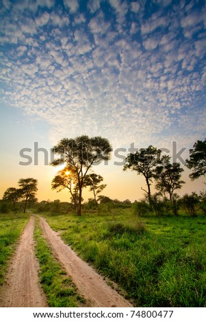 A two track road running through stunning african bush at sunset - stock photo