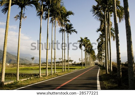A typical Asian landscape.  Palm trees form orderly patterns, rising about rice paddies.  A bicycle path adds a tourist dimension to this picture. Mountains in the background