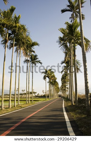 A typical Asian landscape.  Palm trees form orderly patterns, rising about rice paddies.  A bicycle path adds a tourist dimension to this picture.