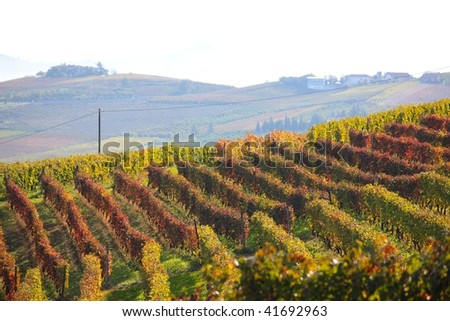A typical autumnal landscape with vineyards in the Langhe shire, Italy - stock photo
